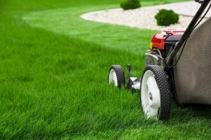 lawn cutting grass